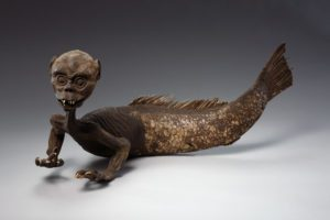 Japanese Monkey-fish - Wellcome Collection in 1919
